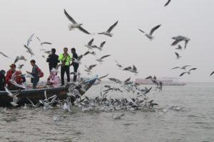 ガンジス川を観光