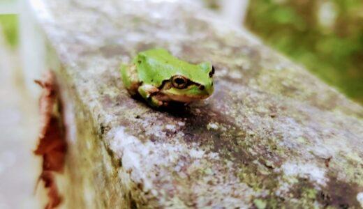 【書評】「カエルを食べてしまえ!」ブライアン・トレーシー|高い成果を上げる方法